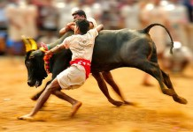 jallikattu jallikkattu to conduct on next mont
