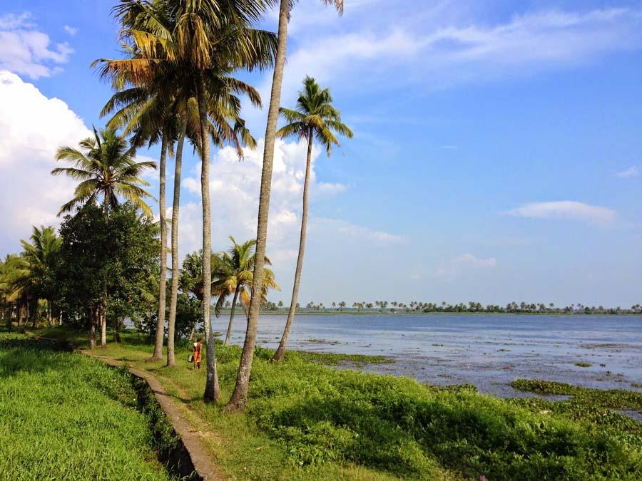 dubai company plans to farm in methrankayal