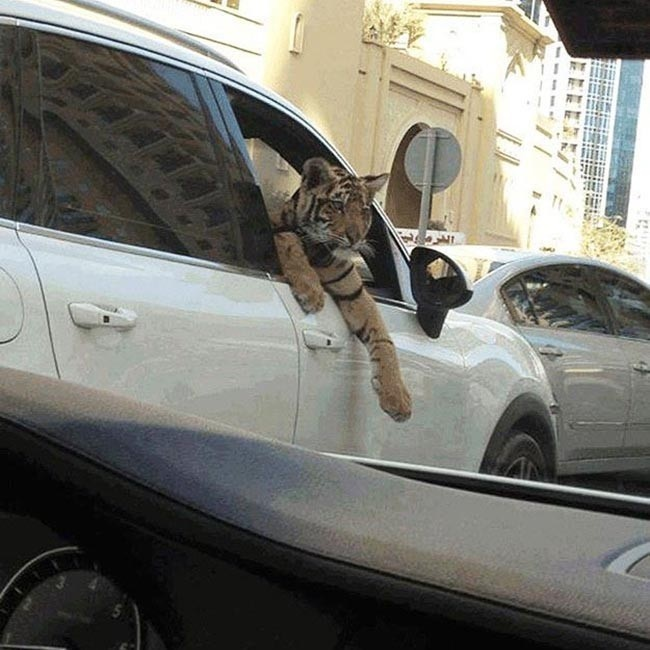 See-who-is-the-passenger-in-this-car-Dubai