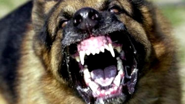 stray dog attacked child 11 hospitalized at pathanapuram due to stray dog attack women died in stray dog attack
