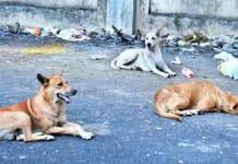 kudumbasree workers gets 2100 rupees per stray dog