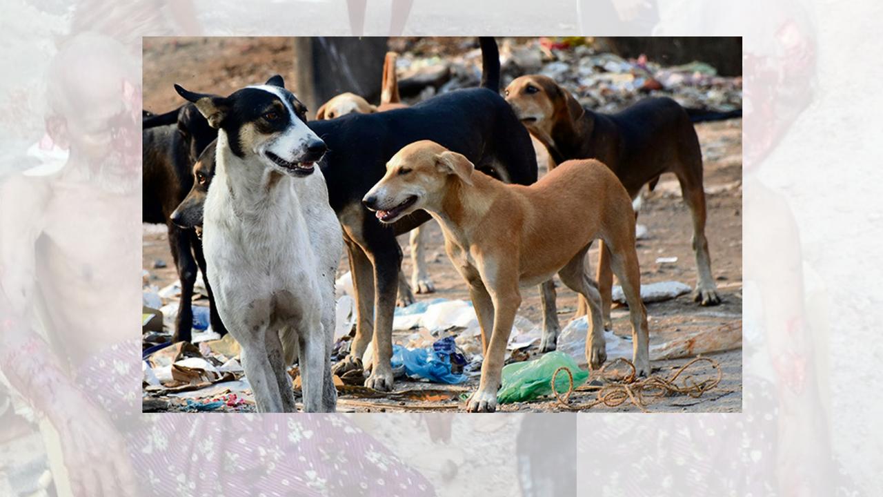 stray dogs killed stray dog attack, 10 injured