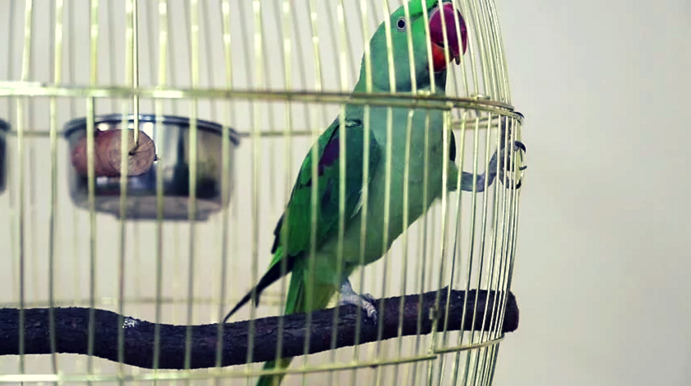 parrot-cage