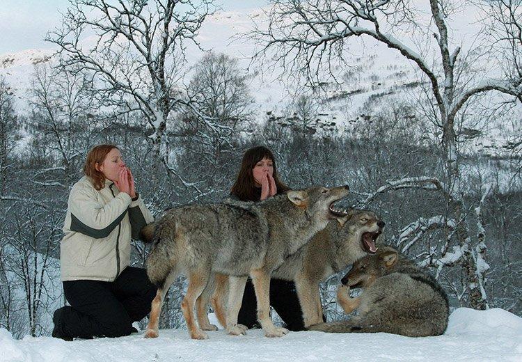 wolves park nigeria