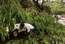 tree-uproot-car