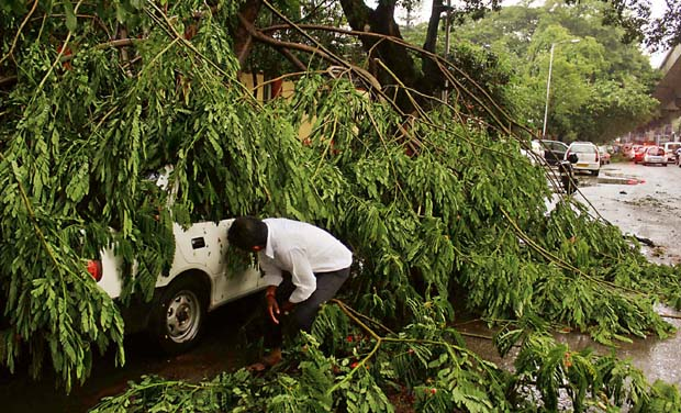 tree-uproot-car
