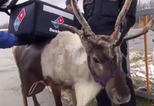 Domino's is training reindeer to deliver pizza