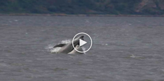 dolphin at vypin