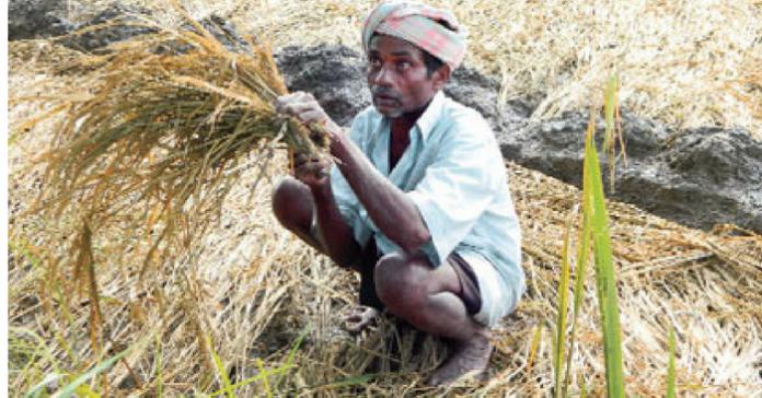 loan for farmers