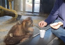 epic response of monkey watching magic