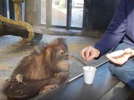 epic response of monkey watching magic