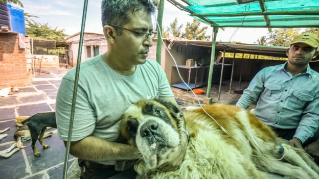 This Bengaluru Man Is A Dad To 735 Dogs