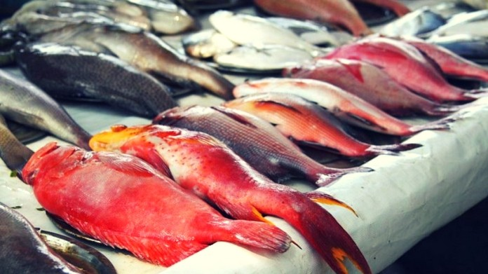 adulteration in fish