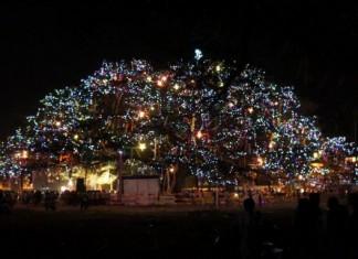 cochin-carnival
