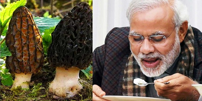 PM Modi Keeps Himself Healthy by Eating These Mushrooms Which Cost Rs 30,000