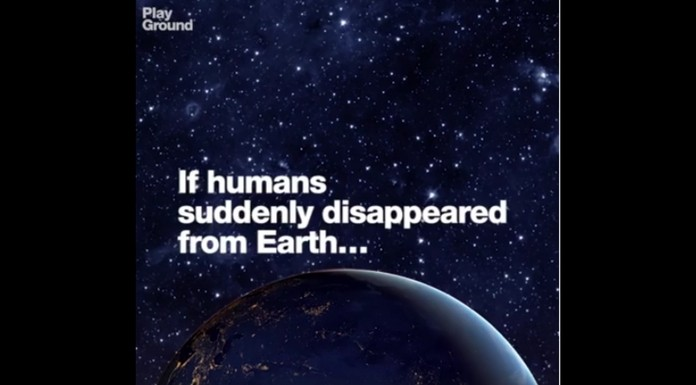 what happens if there are no humans in this world