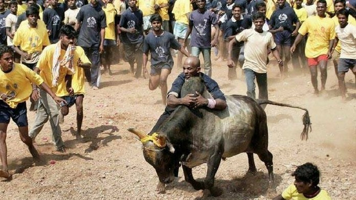 jallikattu ordinance