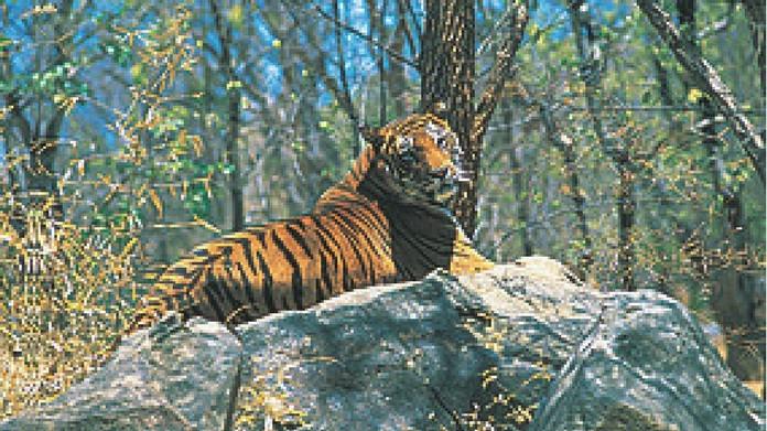 tiger at kozhikode