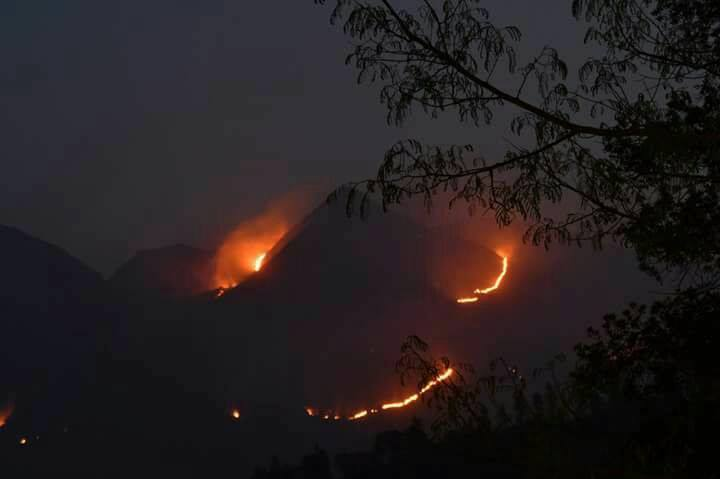heavy forest fire in wayanad