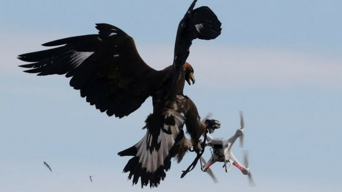 France recruits eagles to seize drone
