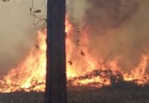 bandipur fire
