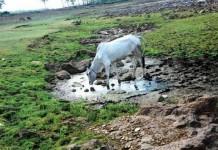 wayanadu dry land