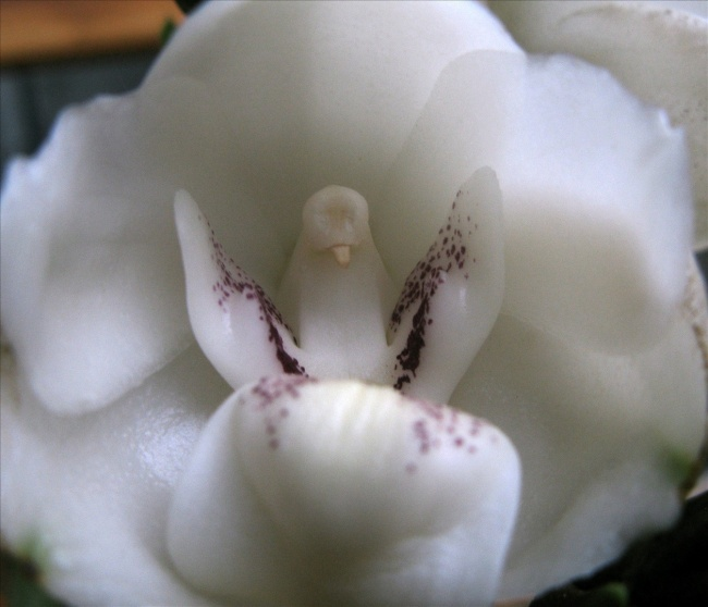 15 orchids which resembles some other things