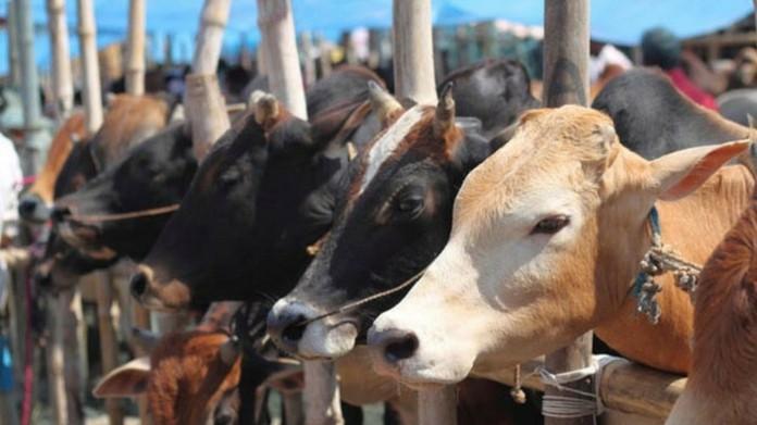 slaughter ban