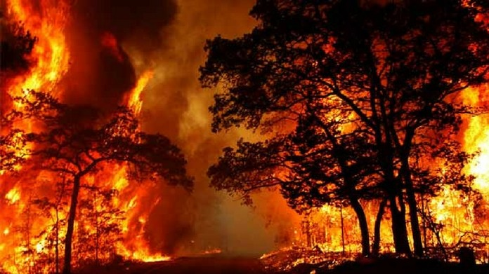 parambikulam wildlife sancturay forest fire