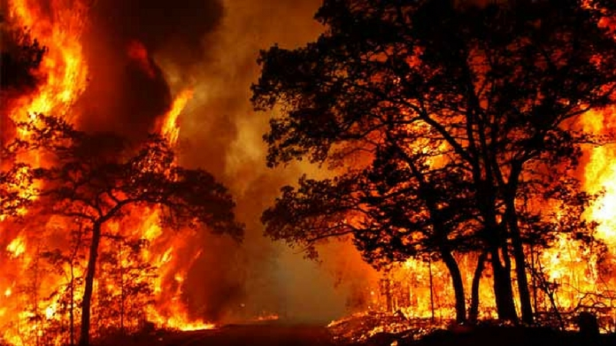 parambikulam wildlife sancturay forest fire