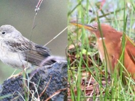 three bird varieties found from aralam sanctuary