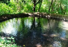govt to pump water in ponds in forest to prevent animals coming out of woods in search of water