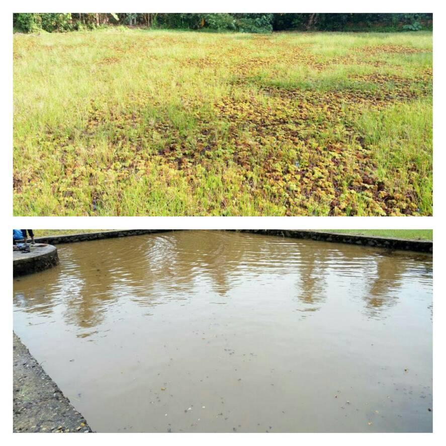 100 ponds in 50 days