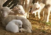 cancer institutes animals kerala