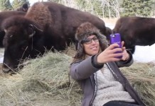 yellowstone national park authoritiess produce safe selfie notice