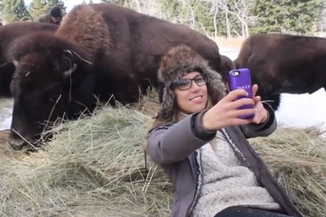 yellowstone national park authoritiess produce safe selfie notice