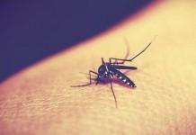 dengue fever grips kerala