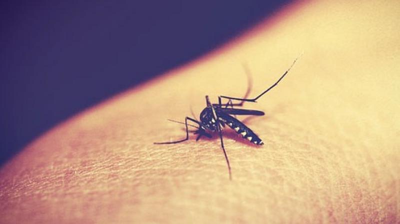 dengue fever grips kerala New dengue virus found in Kerala