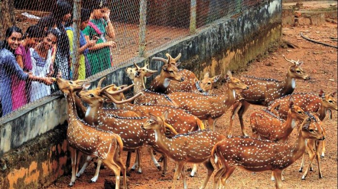 tripunithura hill palace deer gets more facilities