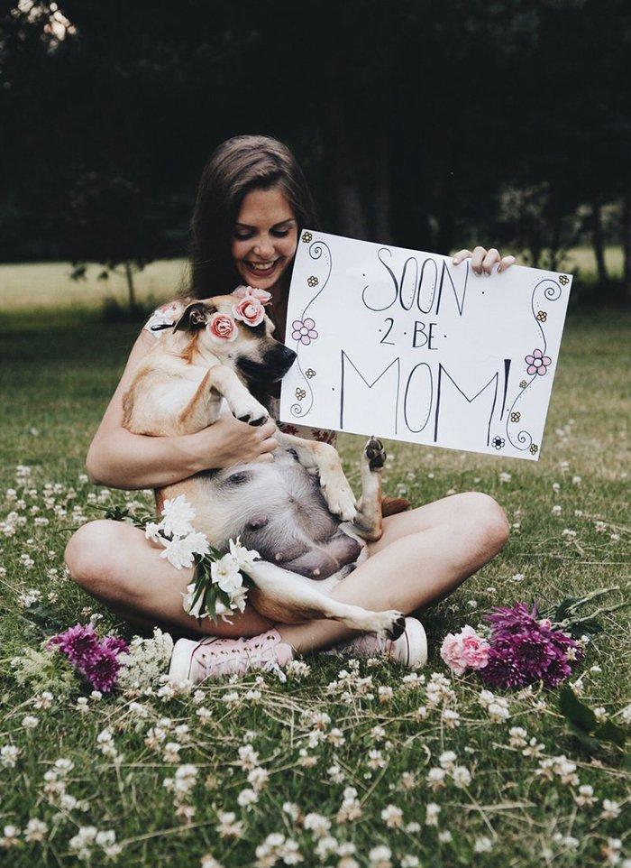 Dog's Maternity Photoshoot