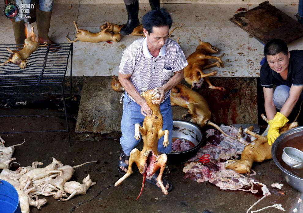 yulin dog meat fest begins 2017