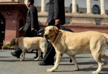 DOGS INDIA