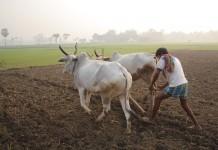 farmers.1