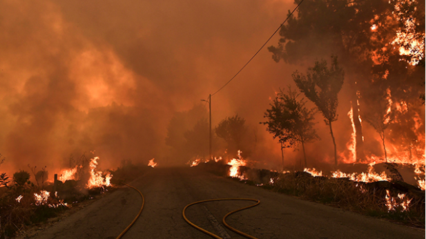 forest fire portugal portugal forest fire death toll rises