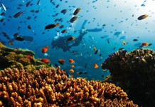 worlds largest coral reef value estimated to be 2.7 lakhs crore rupees