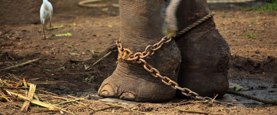 elephant attacked 4 dead