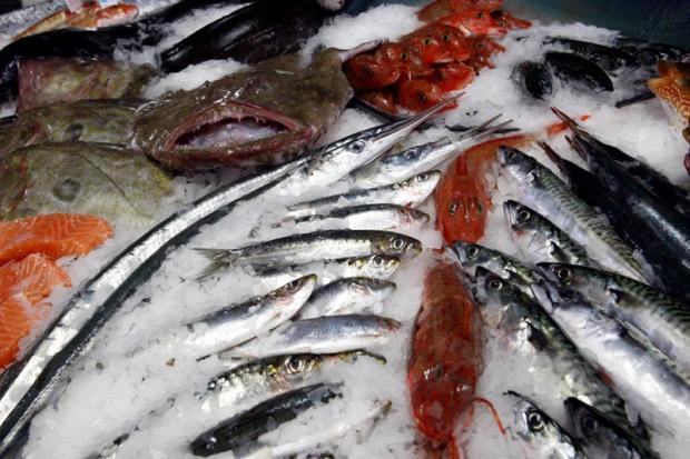 health dept seized 60 kg rotten fish