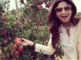 shilpa shetty at pomegranate orchard video