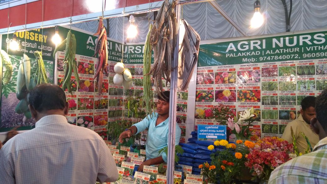 flowers shopping festival and flowers show launched