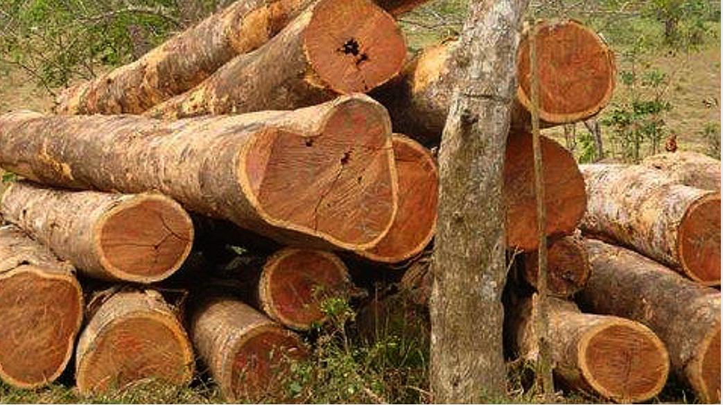 marayur sandalwood smuggling one arrested